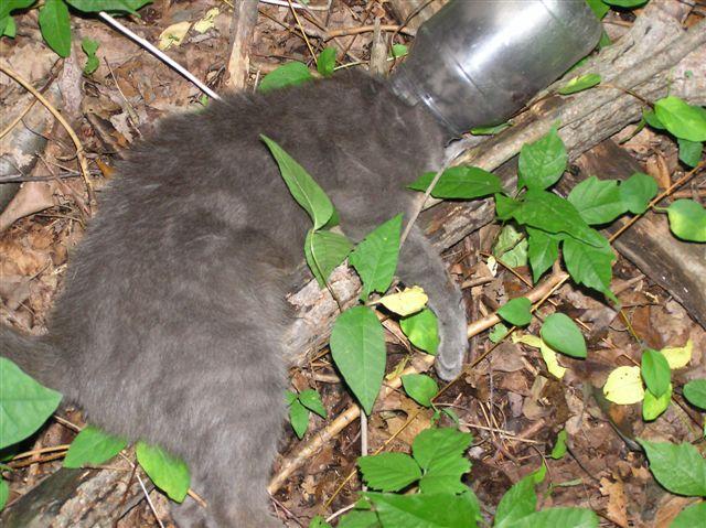 Gato preso em um frasco